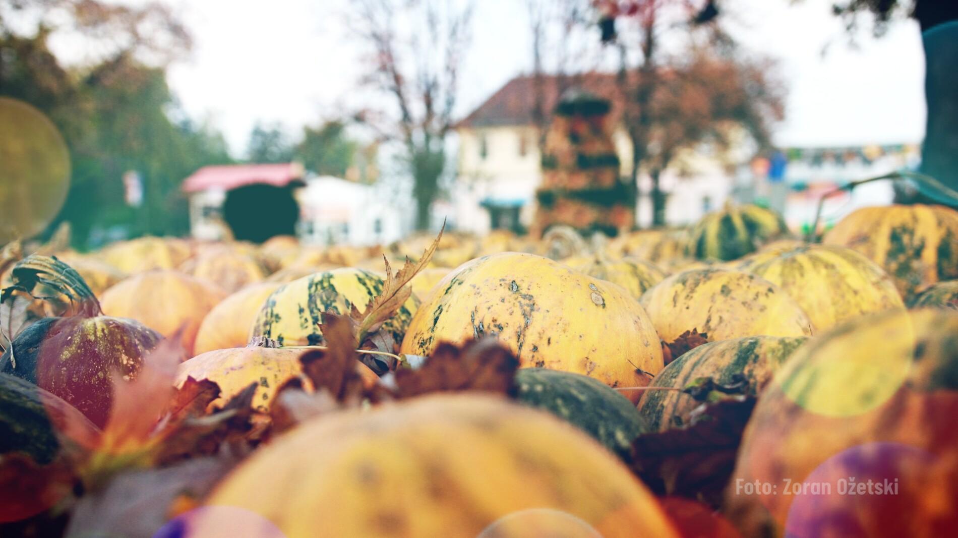 """Otvorena fotografska izložba """"Sunčanom stranom jeseni"""" Zorana Ožetskog"""